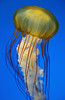 Jellyfish Invasion, National Aquarium, Inner Harbor, Baltimore, Maryland
