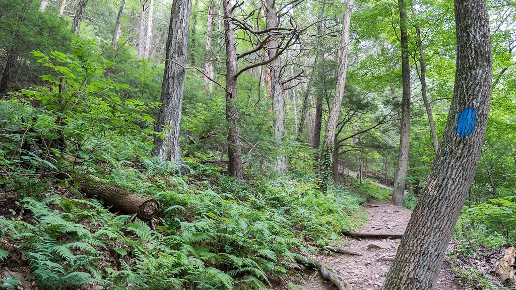 Halfway Trail to Summit - Skinner State Park