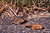 Toad_0505b