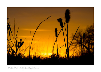 Sunset through cattails, Two Rivers Lake County Park, MN