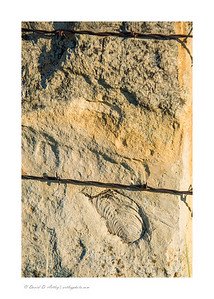 Fossil and Barbed Wire, Kansas Post Rock Country, near Lucas, KS