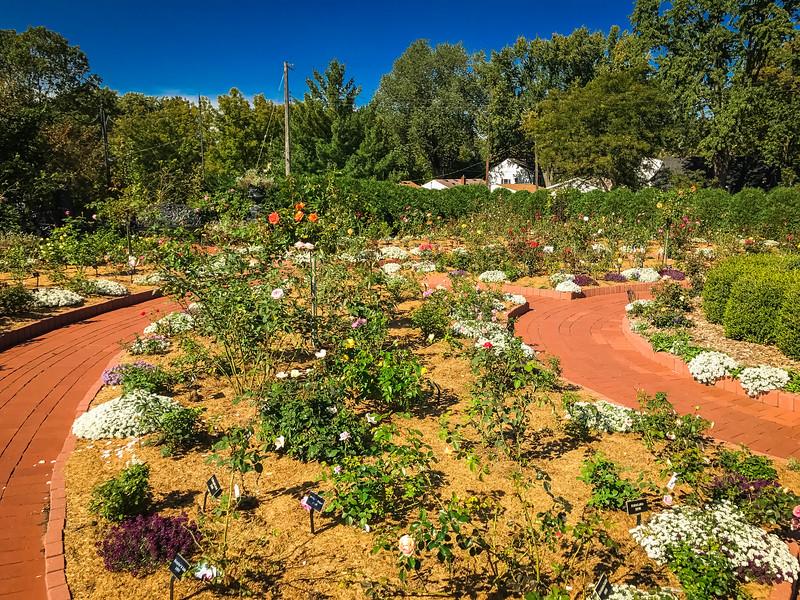 clemens rose garden