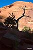 treesilouette_1369