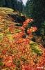 Autumn_0126