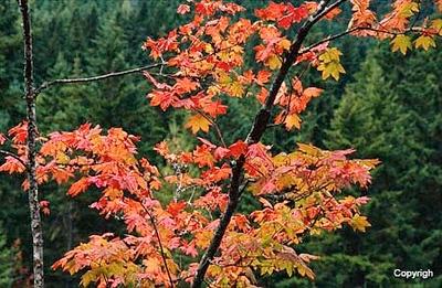 Autumn_0111