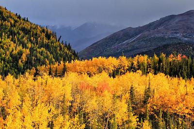 Fall in Denali National Park, AK