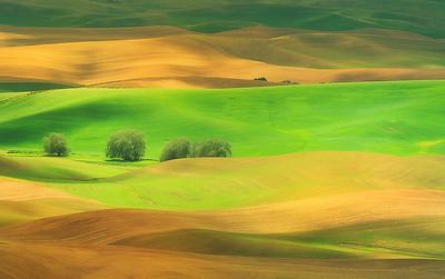 Golden green country