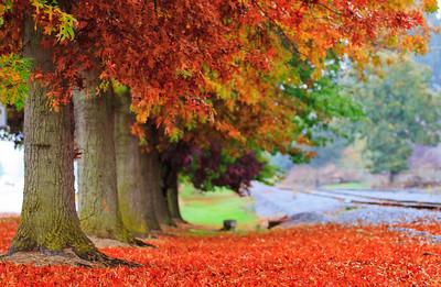 Fall colors along the roads in Woodburn, Oregon, USA
