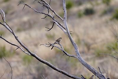 Chihuahuan desert near Carlsbad NM