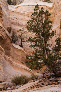SLOT CANYON BRISTLE CONE