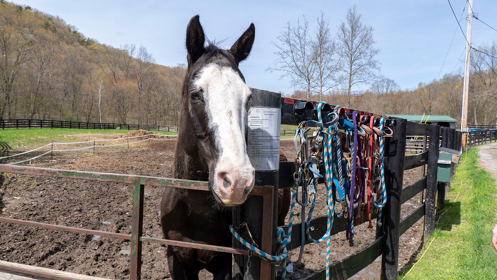Dutchess County NY: Lucky Orphans Horse Rescue