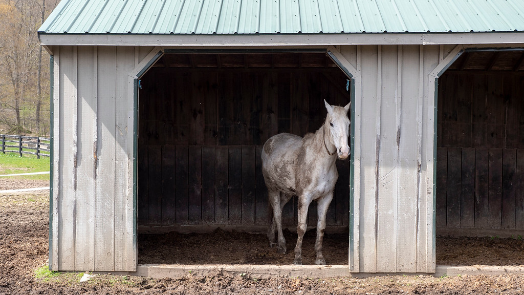 Things to Do in Dutchess County: Lucky Orphans Horse Rescue