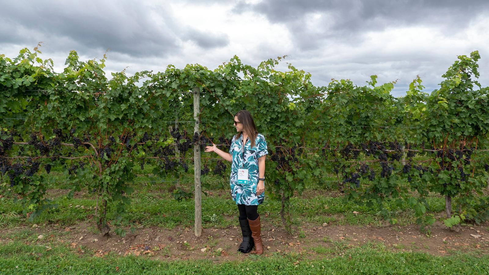 Vegan Wineries: 10 Best Wineries on Seneca Lake NY