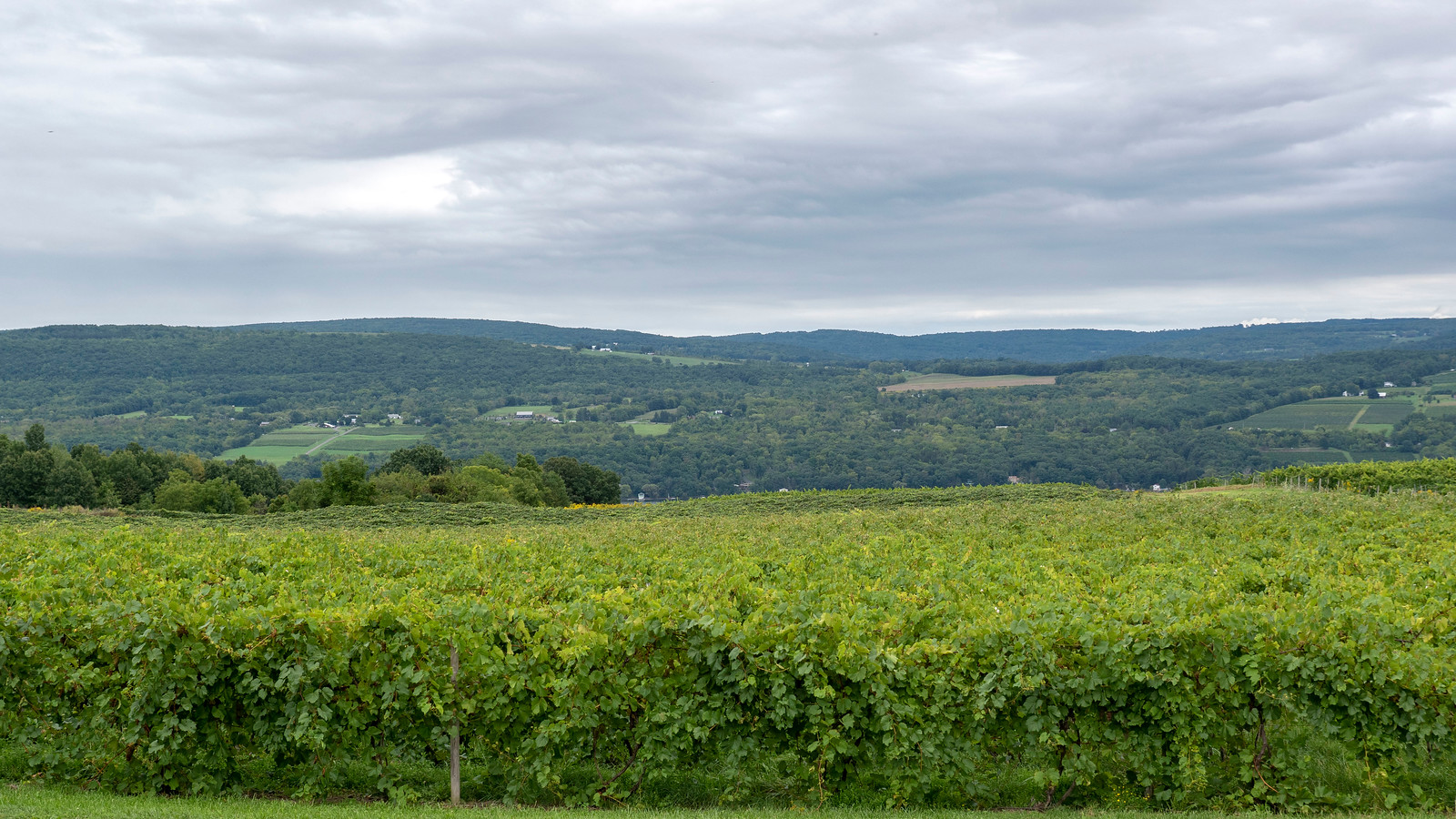 Vegan Wineries: 10 Best Wineries on Seneca Lake NY