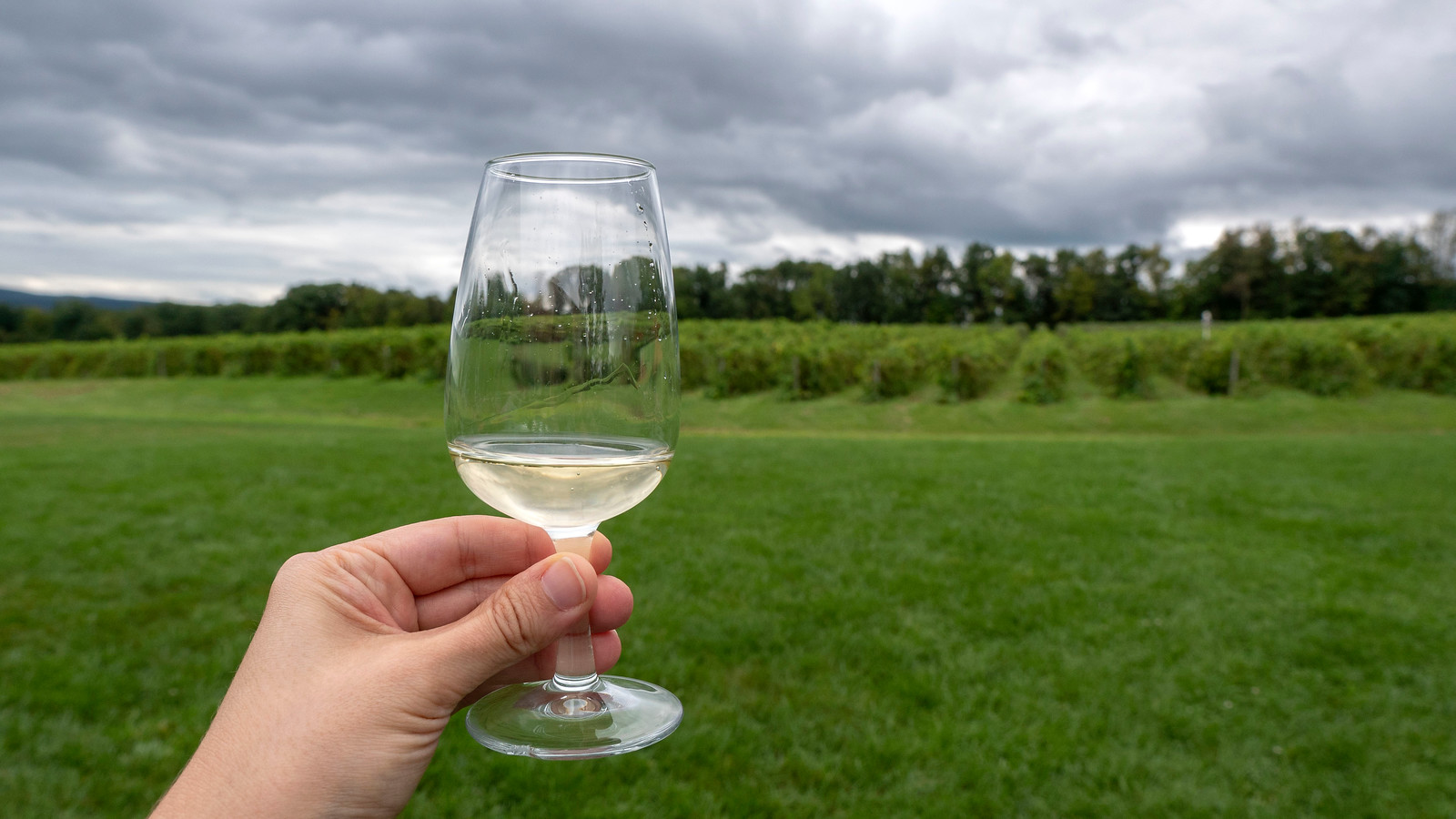 Vegan Wineries: 10 Best Wineries on Seneca Lake NY - Fox Run Vineyards