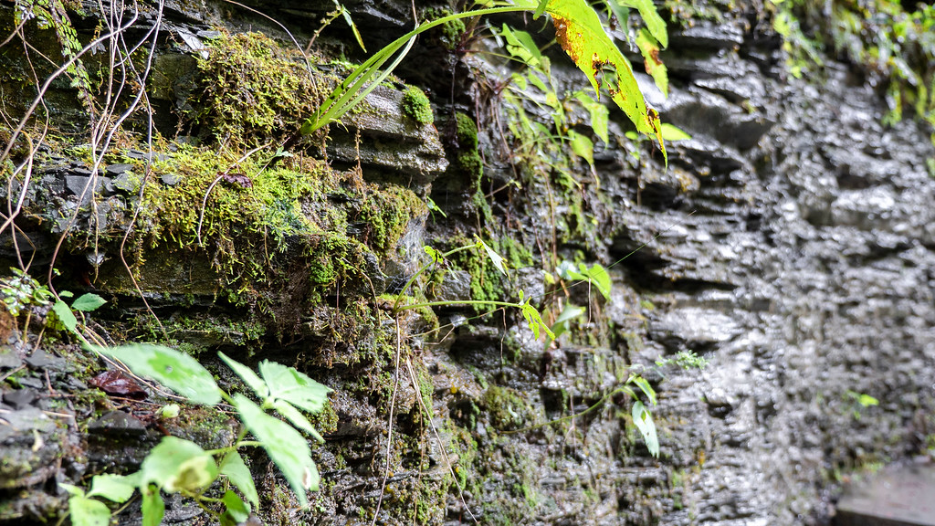 Moss and ferns on the rocky gorge walls