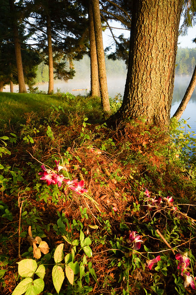 Flowers, Sagamore Lake