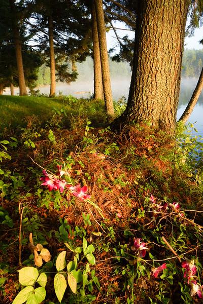 Flowers, Sagamore Lake