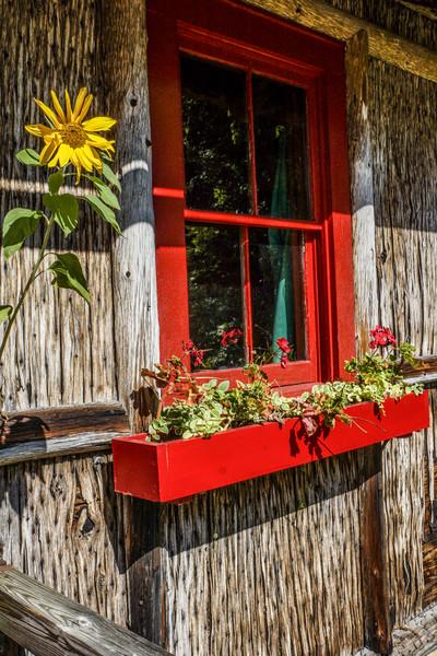 Sunflower and Window