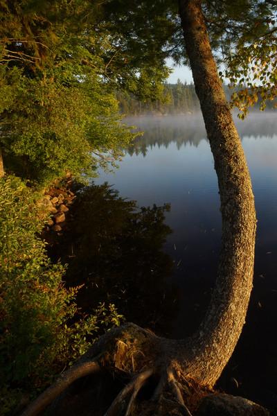Bending Tree, Sagamore Lake