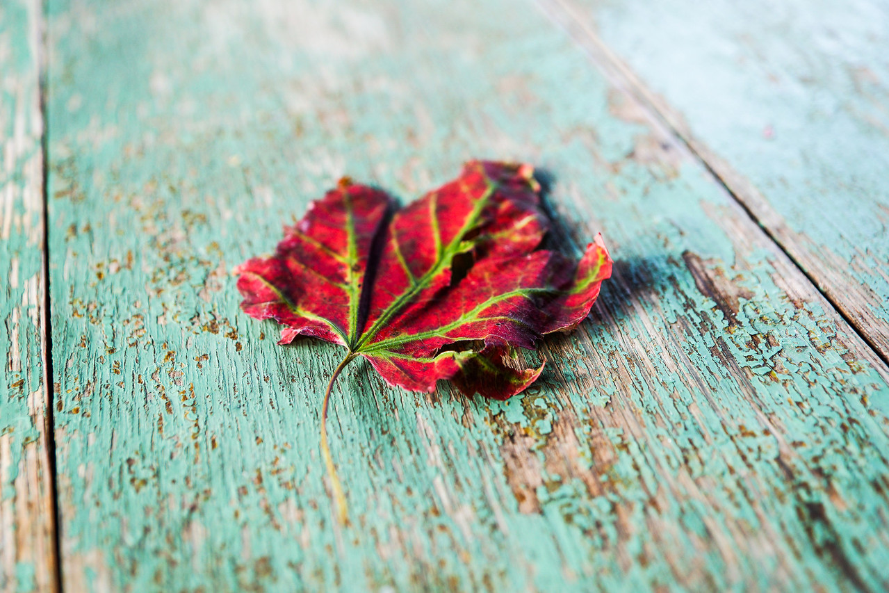 Leaf on Table