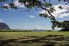 Chinaman's-Hat-(Mokoli'i Is)-seen-from-Kaneohe-Bay,-Oahu
