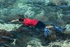 Snorkeler,-Shark's-Cove,-Oahu