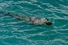 Snorkeler,-La'ie-Point,-Oahu