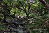 Small-waterfall,-Lili'uokalani-Botanic-garden,-Honolulu,-Oahu