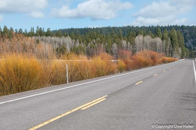 Road near Fort Klamath