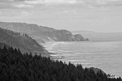 CoastnForest_D306971