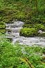 Riverforest1_D701546