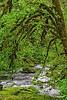 Riverforest2_D701567
