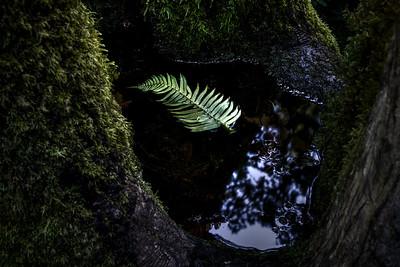 Floating fern leaf