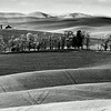Palouse Landscape, Whitman County, Washington