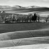 Palouse Landscape, Whitman County, Washington