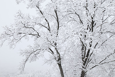 Welcome to Winter with a Fresh Blanket of Snow