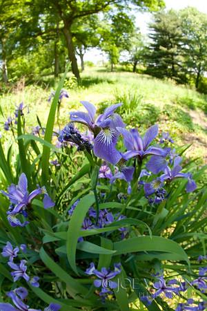 John Bartram's Gardens, Philadelphia, Pennsylvania, Oldest Surviving Botanic Garden in North America