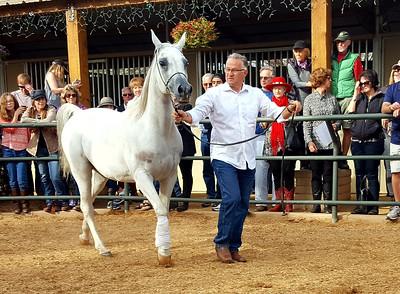 Arabhorse Farm Tour
