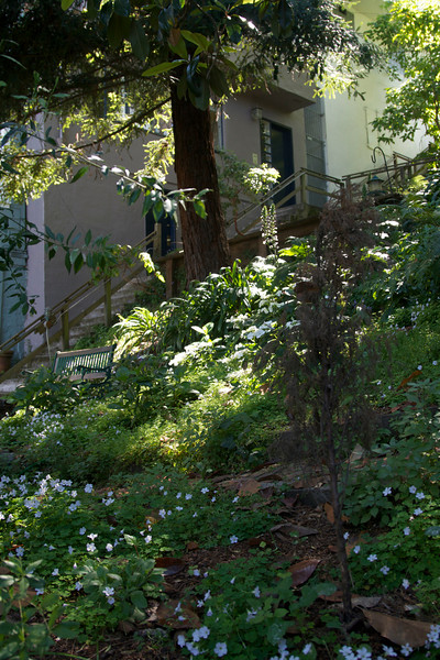 Another lovely garden with a bench on Filbert street.<br /> <br /> The famous wild parrots nest on the trees of Telegraph Hill - the micro climate of seaward side of the hill is suitable for these tropical birds. They can be seen all along the Embarcadero, as far west as Fort Mason.