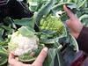 Funny cauliflower that...