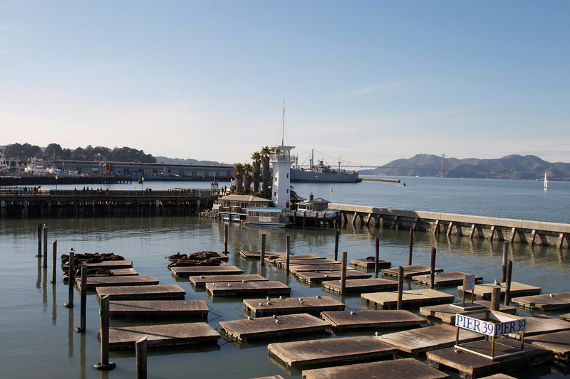 Seals of pier 39.