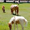 Quicksilver Ranch