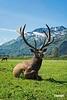 WildlifeSanctuary_D713721
