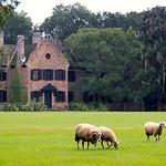 Middleton Place Historic Plantation and Gardens – Charleston, South Carolina
