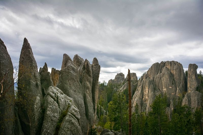 needles highway scenery