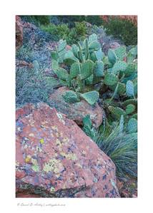 Lichen on boulder with cactus