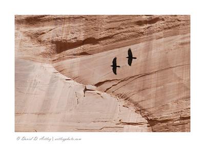 Ravens, Canyon de Chelly