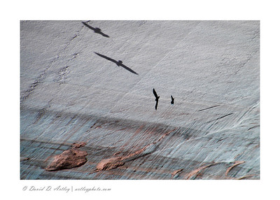 Ravens and shadows, Canyon de Chelly