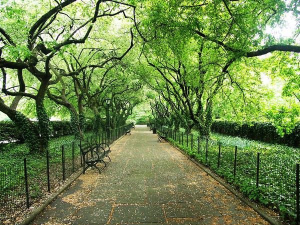 Springtime in New York City